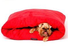 Dogue Snuggle Pod - my dog would love this!! she has to always be underneath the covers