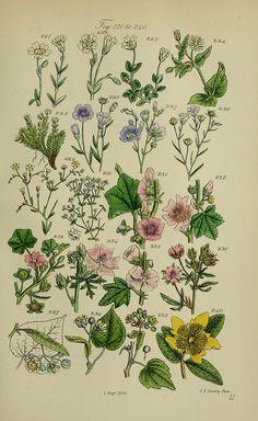 British wildflowers, J. Van Voorst, 1876, Biodiversity Heritage Library via Flickr