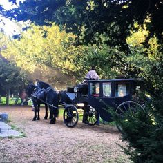 Book your own horse and carriage and have a like Becky and Amelia. Filmed at St Mary's church. Party Venues, Wedding Venues, Horse Carriage, Amelia, Antique Cars, Mary, Horses, Weddings, Book