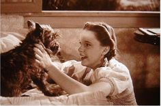 The True Hollywood Story Behind Terry, The Talented Dog Actress Who Played Toto
