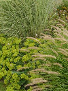 Garten-Impressionen: WINNETOU TRIFFT DSCHINGIS-KHAN?