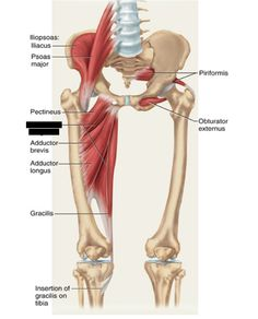 Print Lower Extremity Muscles flashcards and study them anytime, anywhere. Anterior Leg Muscles, Leg Muscles Anatomy, Lower Leg Muscles, Hamstring Muscles, Human Body Anatomy, Muscle Anatomy, Calf Muscles, Acupressure Massage, Foot Reflexology