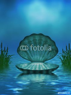 Illustration: Ocean Background with Seashell and Cattails