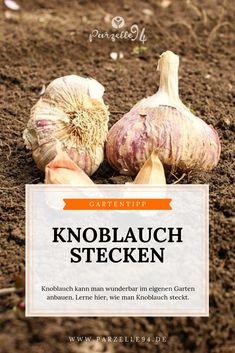 Tipps fürs Gärtnern Planting garlic is easy. You can easily grow these super healthy vegetables in y