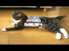 I am Maru - The stunt cat (the melophonic remix) - YouTube