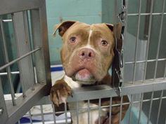 SUPER URGENT -  BRUTIS - A1090215 - - Brooklyn  Please Share:TO BE DESTROYED 09/22/16 **NEEDS A…