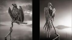 Deadly Lake claims birds. On the left is a sea eagle and on the right a dove. Petrified birds. Photos: Nick Brandt.