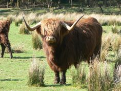 Looking forward to seeing the cute highland cows again.