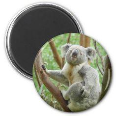 Cute Koala Refrigerator Magnets #Koala #cute #bears #magnets #magshell #zazzle