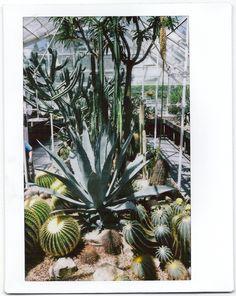 Cactus House | Kaitlyn Harun