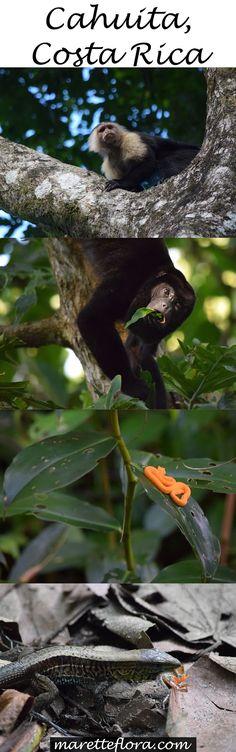 Floradise: Cahuita National Park, Costa Rica | Hiking on the Caribbean side