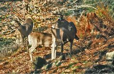 Hunting Guide, White Tail, Deer Hunting, Moose Art, Autumn, Fantasy, Southern, Animals, Google Search