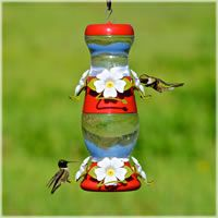 Perky-Pet does make a stacking feeder but it's plastic ~ top only holds 9 ounces. still a nice feeder Wild Bird Feeders, Hanging Bird Feeders, Owasso Oklahoma, Tulsa Oklahoma, Hummingbird Migration, Big White Flowers, Bottle Shop, Double Deck