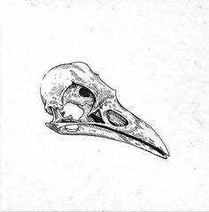 bird skull etching - Google Search