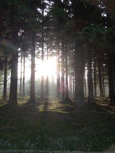 Solen kigger gennem skoven på Ølenevej