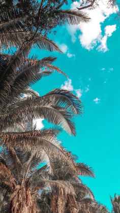 Photography, Landscape photography, Photography tips – Just another WordPress site Palm Wallpaper, Iphone Wallpaper Images, Phone Screen Wallpaper, Summer Wallpaper, Iphone Background Wallpaper, Locked Wallpaper, Mobile Wallpaper, Aesthetic Pastel Wallpaper, Aesthetic Wallpapers