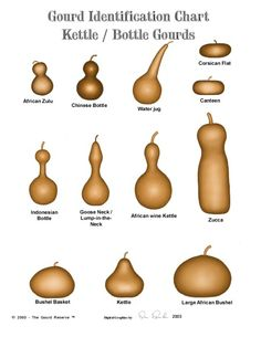 gourd info .....don't know why I'm pinning this, exactly, but seems festive!