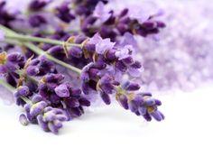 Imbatível no quesito relaxamento, o aroma de lavanda é ideal para ser utilizado no quarto e durante o banho