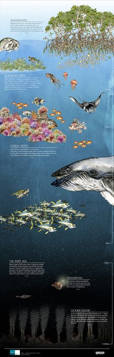 A great infographic about the incredible oceans © edeos.org CC-BY-SA
