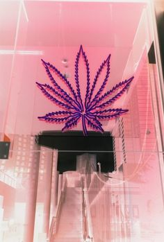 Want this #weed lamp
