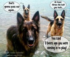 #german #shepherd #dogs asking to play