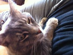My cat is sitting on my lap!  He usually runs away.   #Care2CaughtYouContest Repin please!