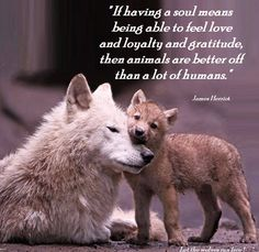 """If having a soul means being able to feel love and loyalty and gratitude, then animals are better off than a lot of humans."" ~ James Herriot❤️❤️"