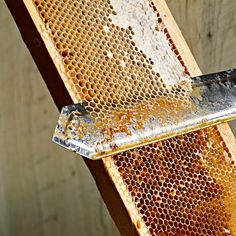 Honey Extracting #Beekeeping; http://pinterest.com/pin/84583299224315324/repin/