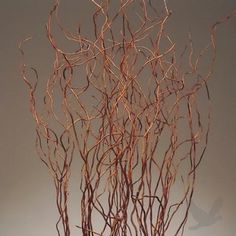 Cheap curly willow branches in bulk...