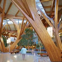 Wood Building Materials Are Sustainable and Renewable