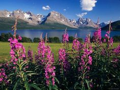 Lyngen Alps Norway - Bing Images