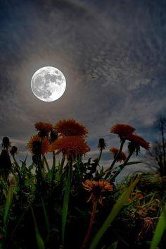 Flores al amanecer de la luna