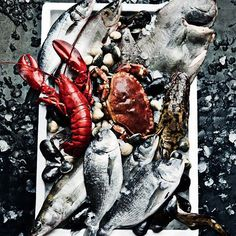 roland persson crayfish fish mackerell  lobster delicious food photography fruits of the sea crab