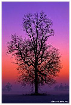 Tree silhouette in winter farm field - by Andrew McLachlan