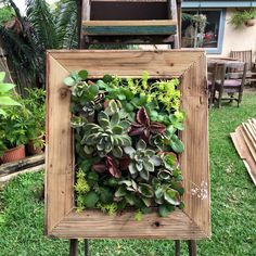 Vertical garden  For the love of succulents fb page  https://www.facebook.com/pages/For-the-Love-of-Succulents-the-living-wall/1603195046581892  Instagram: @FTLO_succulents