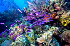 pictures of the barrier reef | Belize's Barrier Reef is the Second Longest in the World - MyBelize ...