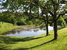 pretty farm pond | beautiful, peaceful setting spacious pasture land a great location ...