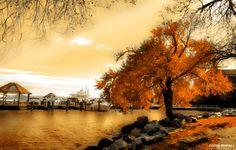 Tree .... by Faris Al Orfali on 500px
