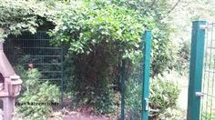 garten katzensicher plexiglas – Google-Suche Outdoor Structures, Google, Plants, Searching, Planters, Plant, Planting