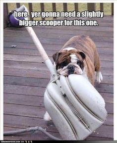 Page 2 of 1488 - Funny pictures and memes of dogs doing and implying things. If you thought you couldn't possible love dogs anymore, this might prove you wrong. Bulldog Quotes, Bulldog Pics, Bulldog Puppies, Funny Puppies, Funny Dog Photos, Funny Animal Pictures, Funny Animals, Easy Animals, Animal Pics