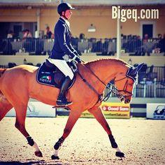 Equestrian Beauty