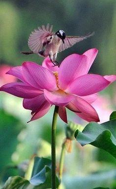 bird and pink flower