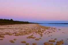 Thrombolithen & atemberaubend schöner Sonnenuntergang am Lake Clifton - Yalgorup National Park - Western Australia