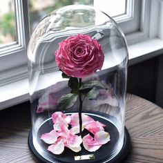 Beauty and the Beast Enchanted Roses From Forever Rose Pink Roses, Pink Flowers, Color Splash, Beautiful Girl Wallpaper, Forever Rose, Enchanted Rose, Preserved Roses, How To Preserve Flowers, Arte Floral