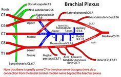 Instant Anatomy - Diagram