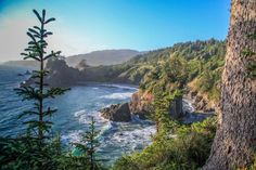 The area is full of beautiful old growth forests, rugged cliffs, sea stacks, and…