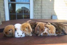 Bunny lineup