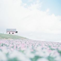 pink house sitting in pink field of flowers