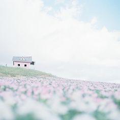 nhà hinh2 trên bải cỏ hoa hồng