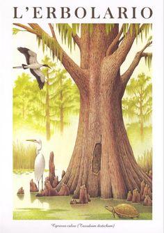 Calendario 1997: paesaggi esotici straordinari negli acquerelli di Franco Testa. Il Calendario de l'Erbolario ci fa viaggiare e conoscere flora e fauna di tutti i continenti